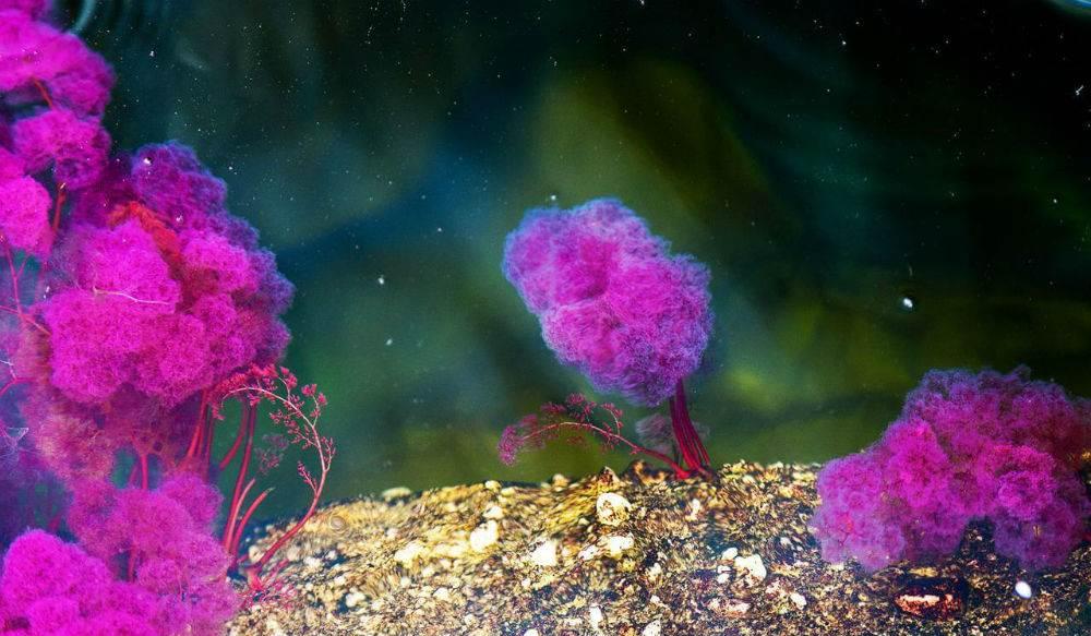 الشعب المرجانية بألوانها المميزة