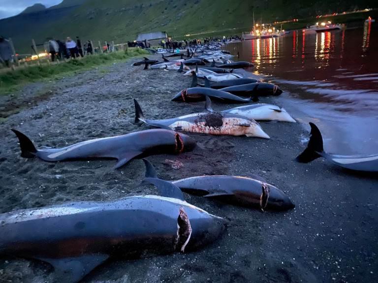 لكن نشطاء يقولون إن الصيادين قتلوا بالفعل ما يكفي للعام الذي سبق حمام الدم يوم الأحد